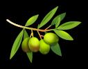 olives-1993583_1920
